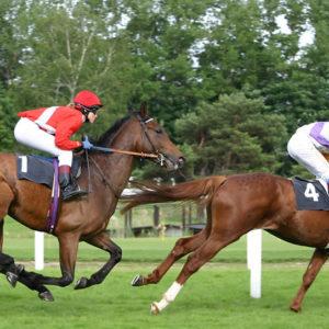 konj-blog